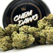 Chem Dawg strain