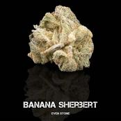 Sour Banana Sherbet